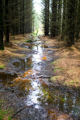 A walk in the forest (Dave Russell (1.5 million views thanks)) Tags: isle island arran west western scotland ecosse clyde tree trees forest forrest water stream brook burn bern reflection colour color nature outdoor photo photograph photography canon eos eos7d 7d