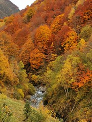Pirineos (la fuerza del otoño) (tonygimenez) Tags: natur paisaje agua colorido rio naturaleza pirineos otoño