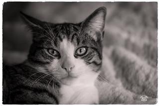 Oslo mon 2eme chat frère de Pespsy