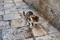 Dubrovnik, Hvar, Split, Zadar, Zagreb