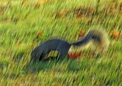 The Early Morning Dig (kfocean01) Tags: autumn fall nature wildlife squirrel sunlight light icm photomanipulation photoshop abstract creativephotography create creative award tree