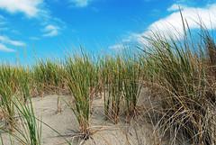 dunes (BehindBlueEyes) Tags: newjersey nj oceangrove shore jerseyshore beach monmouthcounty