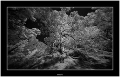 Caldera de Taburiente, Isla de La Palma (Bartonio) Tags: bw caldera canaryislands ir islascanarias lapalma sonya7ir blanconegro infrared laowa1018mm45 modified