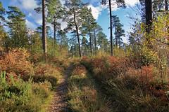 Wotton Common (Deepgreen2009) Tags: wotton surrey common woods pines leithhill heath hills landscape
