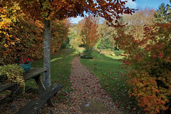 The Path Of Colour (Deepgreen2009) Tags: autumn garden path colourful leaves trees beech cherry acer home gravel
