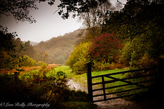 Exmoor National Park (broadswordcallingdannyboy) Tags: woodland wood trees leaves nationalpark autumn fall mood light devon westcountry gardens leonreillyphotography copyright donotcopy eos7d canon leonreilly eflens exmoor colour autumncolour exmoornationalpark somerset hampshire britishnationalpark southdowns qecp