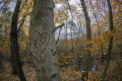 K + J (JMS2) Tags: nature woods forest trees autumn scenic initials carved fisheye love heart