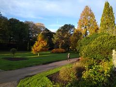 Early morning gardens (auroradawn61) Tags: mobilephonephotography bournemouth dorset uk england november 2019 motorola bounemouthgardens autumncolours