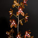 Oncidium mactechillum – Anita & Jerry Spencer