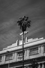 Cuando el árbol no deja ver a la gente, Santiago de Chile (Mario Rivera Cayupi) Tags: canon80d blancoynegro blackandwhite bw streetphotography fotografíadecalle fotografíacallejera streetphotographyinchile 50mmf14shooter sigmaartlens lentesigmaserieart sigma50mmf14