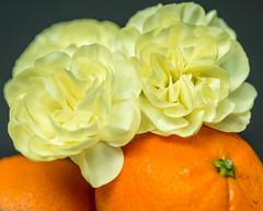 Bloom Everyday (risaclics) Tags: autumn flora looking close friday carnations mandarins stilllife with fruit 60mmmacro nikond610d october2019 flowers autumnflora lookingcloseonfriday stilllifewithfruit