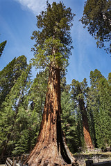 Sequoia National Park  20 (Largeguy1) Tags: approved canon 5d mark ii