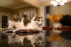 305-365 (Garen M.) Tags: buttercup jerry jojo nikkor2470f28s nikonz6 cats home