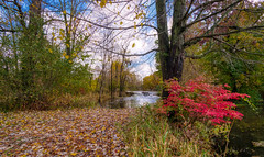 Autumn Arrives in Indiana (7) (tquist24) Tags: bonneyvillemillcountypark hdr indiana littleelkhartriver nikon nikond5300 outdoor autumn clouds color colorful fall geotagged nature outside park river sky tree trees water waterfall