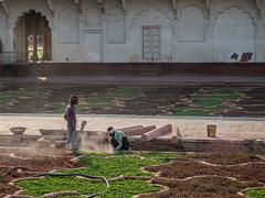 Men at Work (Siobhán Bermingham) Tags: agrafort gardem workers agra india