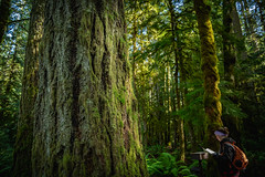 Barnes Creek Trail - Marymere Falls Trail - Lake Crescent, Washington - September 2019 (Chad Baxter) Tags: nikon d850 2485mm g barnes creek trail marymere falls lake crescent moss forest mountains rainforest rain green lush amazing dreamy cool wet nature wildlife trees water olympic national park