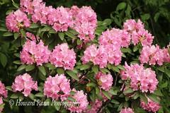 Fellows Riverside Gardens (56) (Framemaker 2014) Tags: fellows riverside gardens mill creek park youngstown ohio northeast united states america