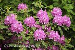 Fellows Riverside Gardens (55) (Framemaker 2014) Tags: fellows riverside gardens mill creek park youngstown ohio northeast united states america