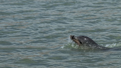 Dolphin (vinicius_gerlach) Tags: canon t7i rio riograndedonorte brasil brazil dolphin beach nature animal