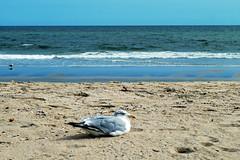 at rest (BehindBlueEyes) Tags: newjersey nj oceangrove shore jerseyshore beach monmouthcounty