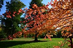 Shine bright.... (Tobi_2008) Tags: herbst autumn bäume trees sachsen saxony deutschland germany allemagne germania