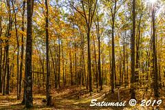0104_untitled_20191025.jpg (Satumasi) Tags: 2019 nikond800 usa afsnikkor1424mmf28ged vacation fall northamerica michigan