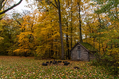 Nestled Away (Tom Gill.) Tags: cabin indiana fall autumn woods leaves colorful indianadunesnationalpark baileyhomestead