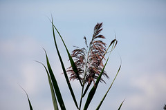 _U7A4028 (rpealit) Tags: scenery nature river wildlife national phragmites refuge wallkill wildife