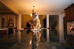 299-365 (Garen M.) Tags: buttercup jerry jojo nikkor2470f28s nikonz6 cats home