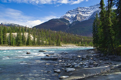 Athabasca River (Bernie Emmons) Tags: athabascariver river blue bluesky mountains trees