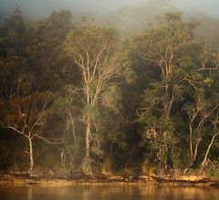 River Guardians (benpearse) Tags: river guardians hawkesbury nsw australia fine art landscape prints artist ben pearse photography photographer sunrise fog mist square