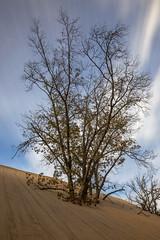 The Baldy Sketch (Explored) (Ramen Saha) Tags: mountbaldy indianadunes indianadunesnationalpark nationalpark indiana dunes sanddunes oaktree longexposure ramensaha clouds autumn fall
