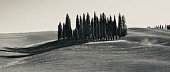 Tuscan Cypress (Professor Bop) Tags: pienza2019 tuscany pienza monochrome monochromatic bw blackandwhite professorbop drjazz olympusem1 italy italia cypress trees nature val dorcia