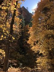 Canyon Autumn (zoniedude1) Tags: arizona autumn fallcolors leaves colorful canyon westforkoakcreek sedona coconinonationalforest sunlight glowing redrocks wilderness outdoors adventure hiking nature southwest az usa wild iphone8plus zoniedude1