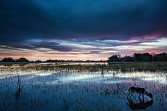 Pantanal da Nhecolândia, MS (Marcos Paiva) Tags: pantanal baía pôrdosol entardecer nhecolândia pantanaldanhecolândia paisagem landscapes landscape ngc