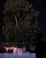 Night walk. (purefunk714) Tags: nightwalk westminster tree smallhouse fujifilmxt30 35mm latenight siglerpark