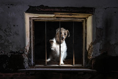 Mac was framed (RissaJT_23) Tags: dog dogportrait mydogmac canine animal animalphotography dogphotography jail frame framed canon5dmarkiv canon2470mm