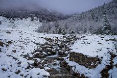 Agua muy fresca (SantiMB.Photos) Tags: 2blog 2tumblr 2ig conangles nieve snow otoño autumn bosque forest arroyo creek niebla mist geo:lat=4262329075 geo:lon=076758100 geotagged senet cataluna españa