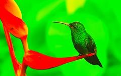 Linda ave (Eslegendario) Tags: birds hummingbird aves lindo cute flickr photos original english español green verde