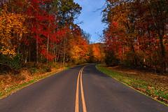 Pennsylvania (KennardP) Tags: pennsylvania buckscounty fallcolors autumn road canoneosr sigmaartlens sigma24mmf14dghsmartlens trees