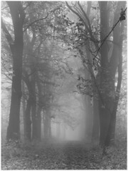 About Feeling Blue / O smutku (Piotr Skiba) Tags: darkroomprint siemianowice śląskie bażantarnia poland pl piotrskiba film hp5 bw monochrome fog forest leaves autumn morning 4x5 intrepid landscape