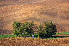 The Chapel (Paweł Gałka) Tags: south moravia landscape landschaft rural chapel trees field golden hour brown green waves outside