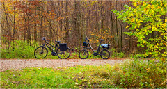 Unterwegs im Wald (Janos Kertesz) Tags: bayern bavaria gauting wald forest autumn bicycle sport bike cycling healthy cyclist nature activity fun action outdoors leisure active