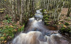 Oly_B030665 (calpha19) Tags: imagesvoyagesphotography adobephotoshoplightroom olympusomdem1mkii m12100f4 zuiko balade forêt hautrain ngc geo flickrsexplore rivière river torrent ruisseau eaux vives automne novembre 2019 cascades waterfall