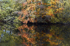 Basingstoke Canal Deepcut-Pirbright 6 November 2019 015 (paul_appleyard) Tags: basingstoke canal deepcut november 2019 reflections reflected autumn colours fall colors