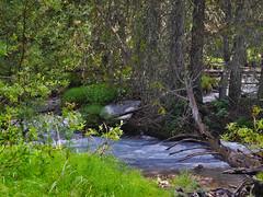 Jungle Icefield HW 2017 (matthias416) Tags: green river water jungle nature wald dschungel fluss bach unterholz britishcolumbia canada kanada jasper banff woods forest yourbestoftoday