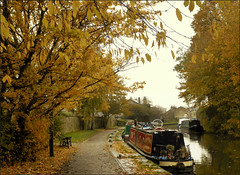 Autumn along the canal. (Country Girl 76) Tags: canal leeds liverpool skipton autumn colours leaves boats towpath