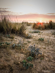 In the dunes (Through_Urizen) Tags: category england focusstacked greatyarmouth landscape norfolk places sunrise canon70d sigma1020mm canon outdoor sun grass sand sanddunes windturbine clouds sky plants landscapephotography greatbritain uk unitedkingdom