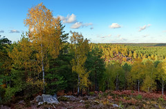 Apremont gorges (hbensliman.free.fr) Tags: forest nature landscape france outdoor plant foliage pentax pentaxart pentaxk1 europe fontainebleau autumn season