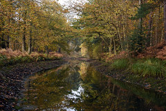 Basingstoke Canal Deepcut-Pirbright 6 November 2019 011 (paul_appleyard) Tags: basingstoke canal deepcut november 2019 reflections reflected autumn colours fall colors